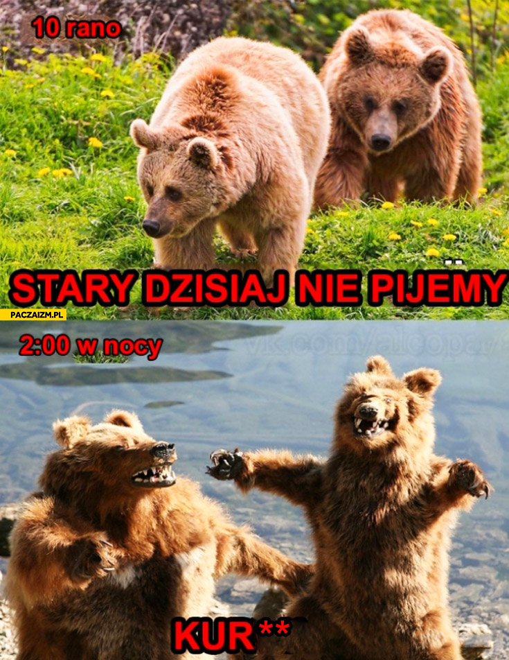 10 rano stary dzisiaj nie pijemy, 2 w nocy niedźwiedzie