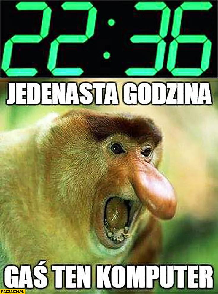 22:36 jedenasta godzina gaś ten komputer typowy Polak nosacz małpa