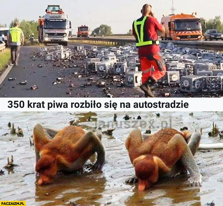350 krat piwa rozbiło się na autostradzie małpy spijają z jezdni typowy Polak nosacz małpa