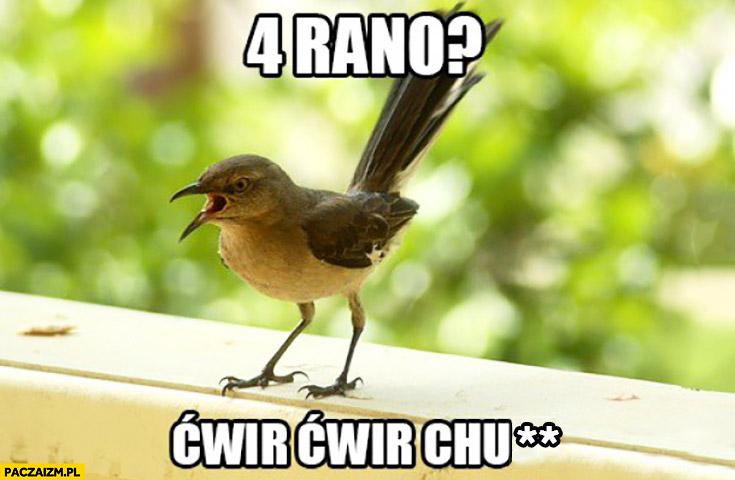 4 rano ćwir ćwir ptak od rana śpiewa
