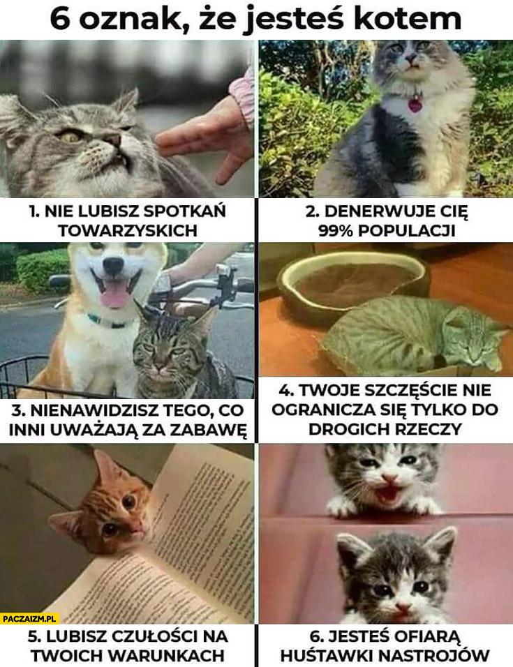 6 oznak, że jesteś kotem: nie lubisz spotkań, denerwuje Cię większość ludzi, nienawidzisz tego co inni lubią, lubisz czułości na swoich warunkach, masz huśtawkę nastrojów