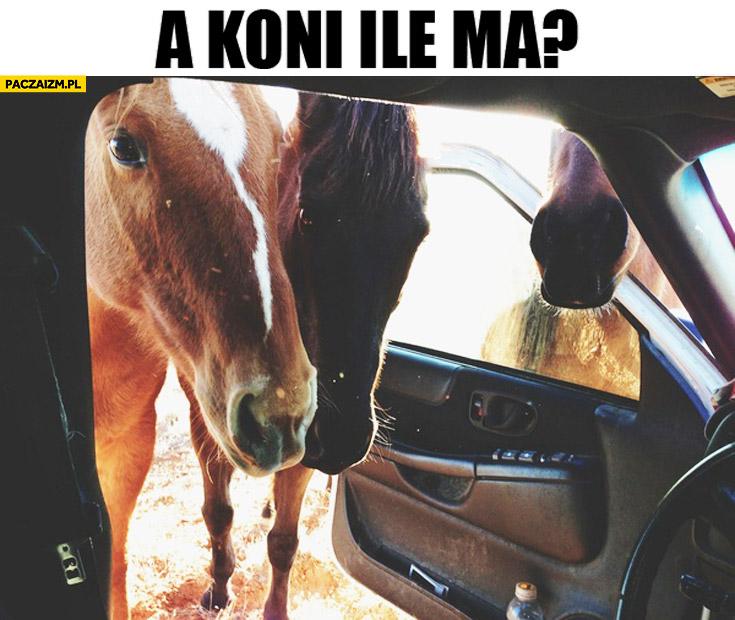 A ile koni ma? Konie zaglądają do auta
