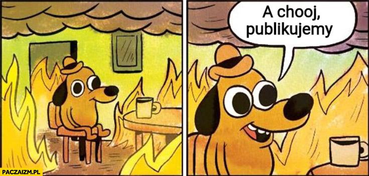 A kij publikujemy wyrok trybunału pali się pożar