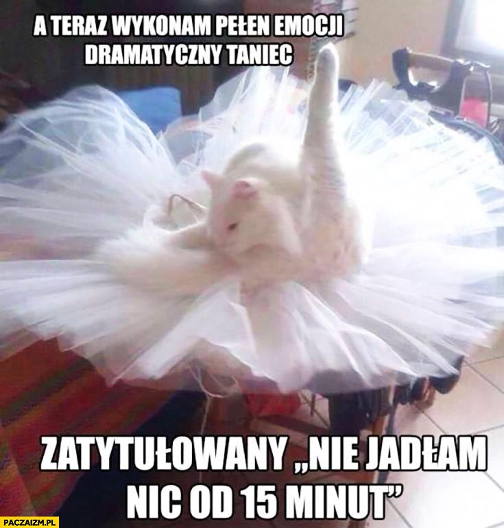 A teraz wykonam pełen emocji dramatyczny taniec zatytułowany nie jadłam nic od 15 minut kot balet
