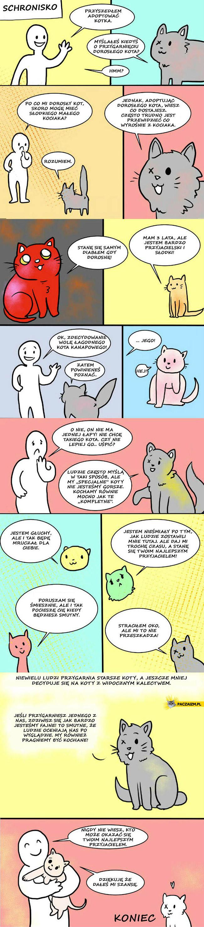 Adopcja kota bez łapy