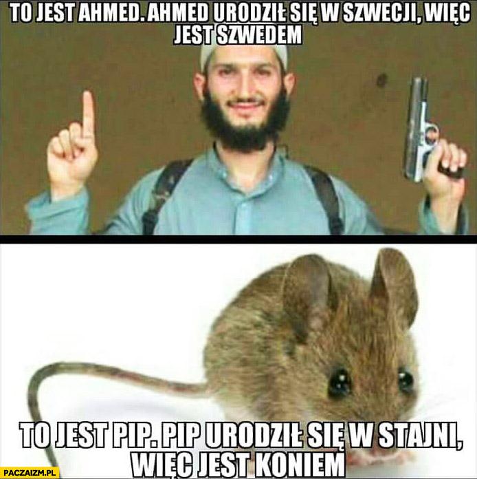 Ahmed urodził się w Szwecji więc jest Szwedem, mysz szczur Pip urodził się w stajni wiec jest koniem