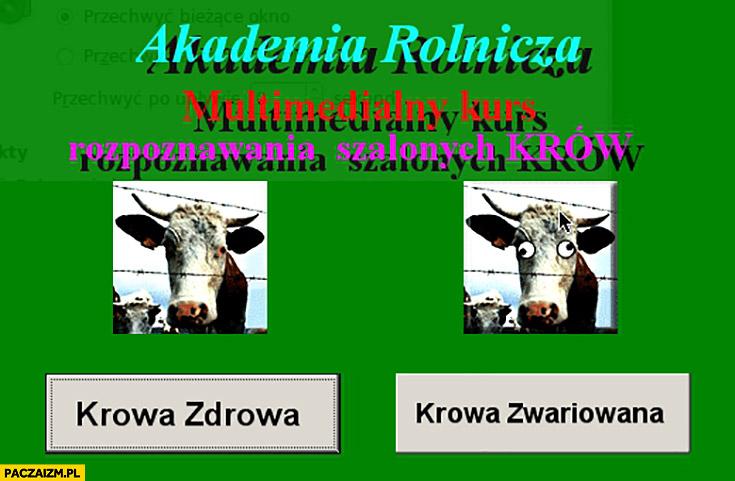 Akademia rolnicza multimedialny kurs rozpoznawania szalonych krów. Krowa zdrowa vs krowa zwariowana