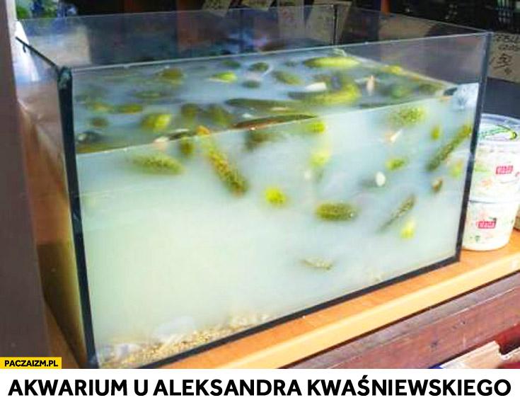 Akwarium u Aleksandra Kwaśniewskiego