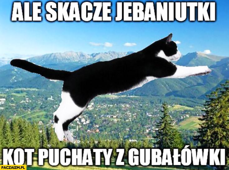 Ale skacze jechaniutki kot puchaty z Gubałówki