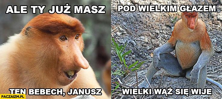 Ale Ty już masz ten bebech Janusz, pod wielkim głazem wielki wąż się wije typowy Polak nosacz małpa