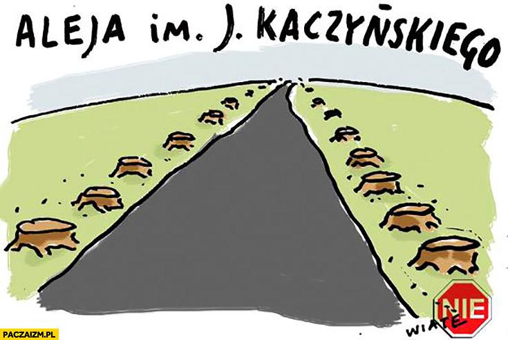 Aleja im. Jarosława Kaczyńskiego same ścięte drzewa przy drodze