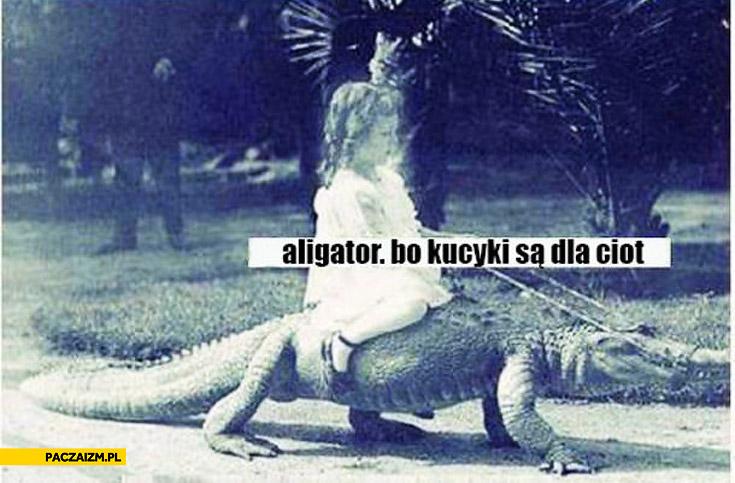 Aligator bo kucyki są dla ciot