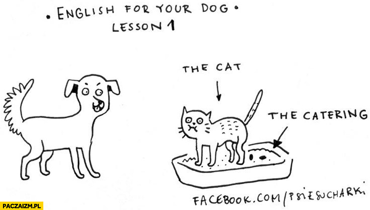 Angielski, lekcja 1: the cat, the catering, kupa. Psie sucharki