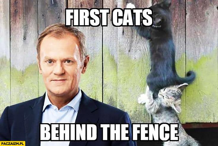 Angielski z Tuskiem pierwsze koty za płoty first cats behind the fence
