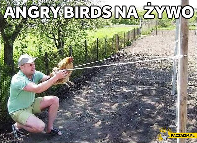 Angry Birds na zywo