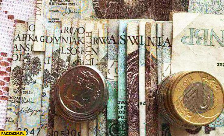Arka Gdynia kurna świnia napis ułożony z banknotów pieniędzy
