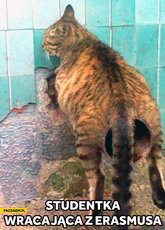 Studentka wracająca z Erasmusa kot