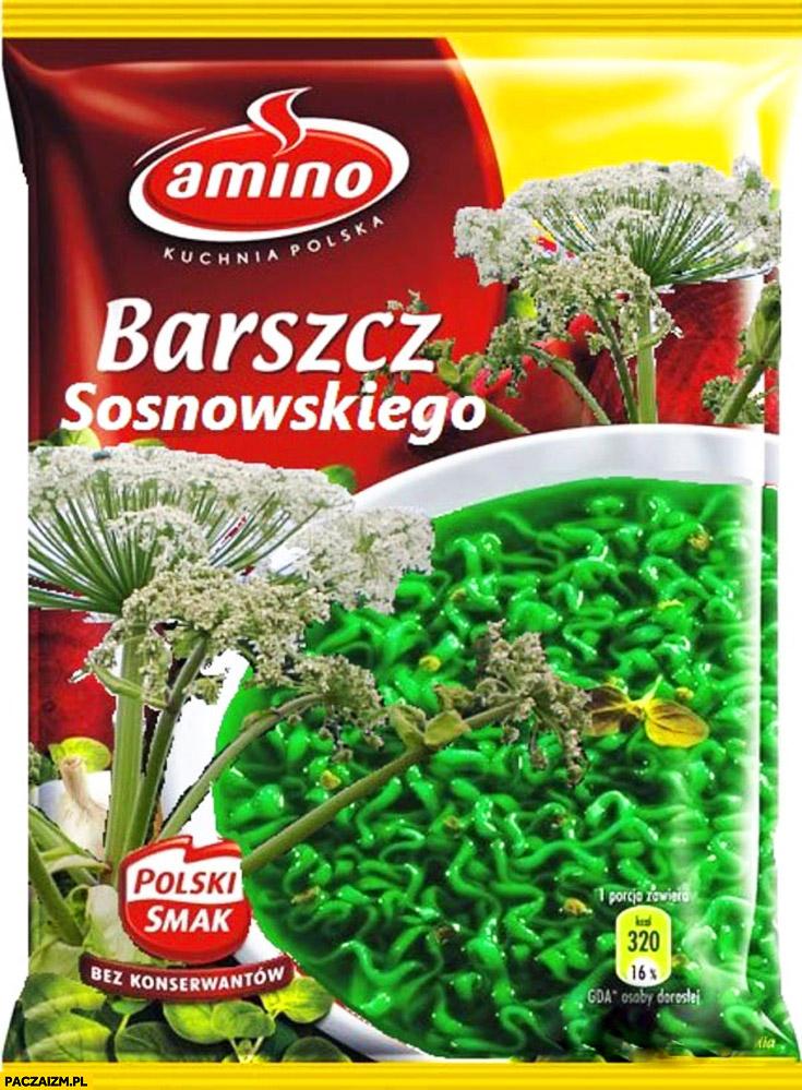 Barszcz sosnowskiego Amino