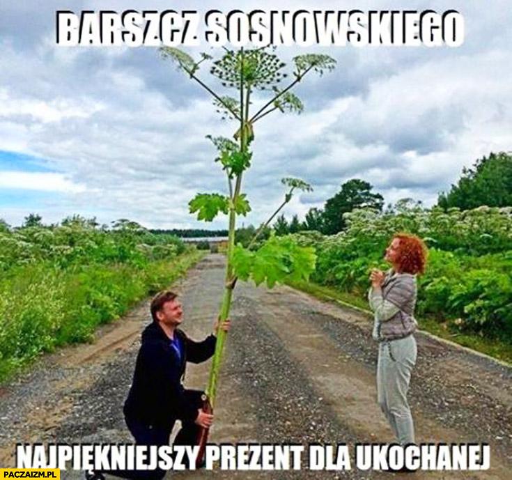 Barszcz Sosnowskiego najpiękniejszy prezent dla ukochanej