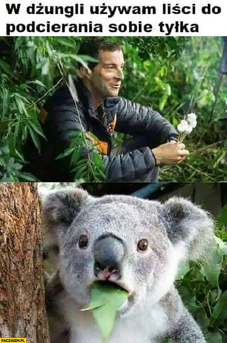Bear Grylls w dżungli używam liści do podcierania sobie tyłka, koala zdziwiony przerażony