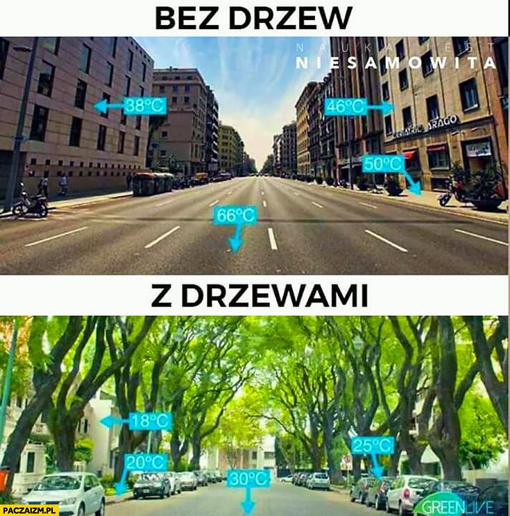 Bez drzew vs z drzewami temperatura w mieście porównanie