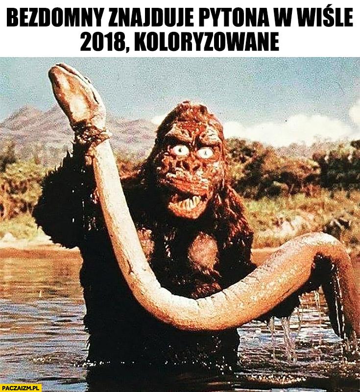 Bezdomny znajduje Pytona w Wiśle. 2018, koloryzowane Godzilla małpa