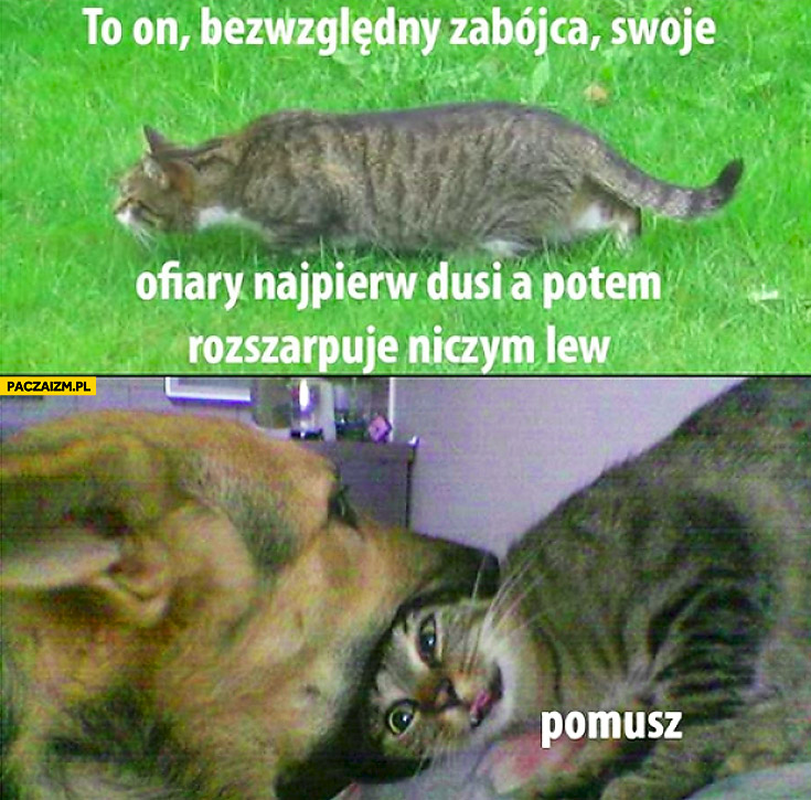 Bezwzględny zabójca pomusz kot