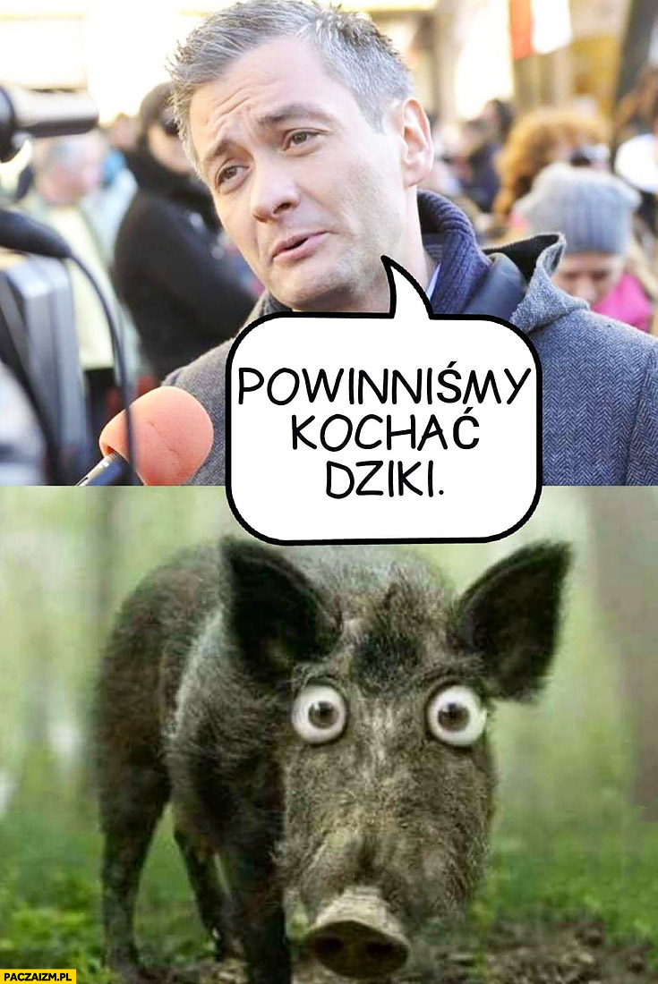 Biedroń powinniśmy kochać dziki dzik przerażony wielkie oczy