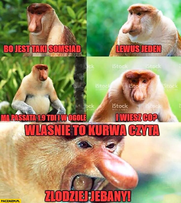 Bo jest taki sąsiad, lewus jeden, ma Passata 1.9 TDI i wiesz co? Właśnie to kurna czyta złodziej jechany typowy Polak nosacz małpa