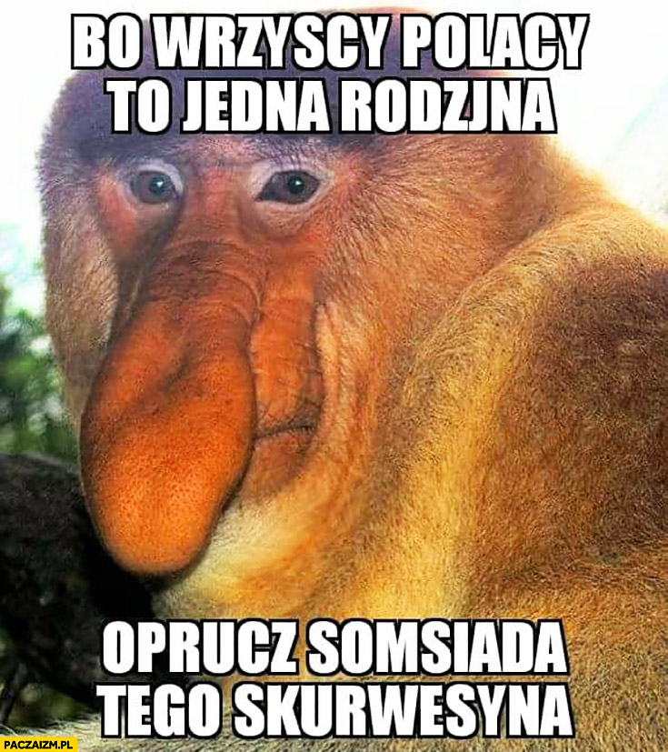 Bo wszyscy Polacy to jedna rodzina oprócz sąsiada tego sukinsyna typowy Polak nosacz małpa
