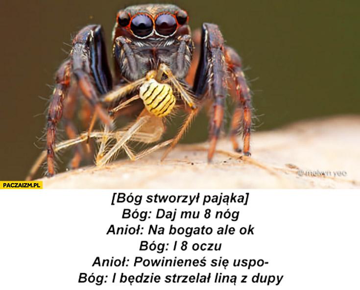 Bóg stworzył pająka, daj mu 8 nóg i 8 oczu i będzie strzelał liną z dupy