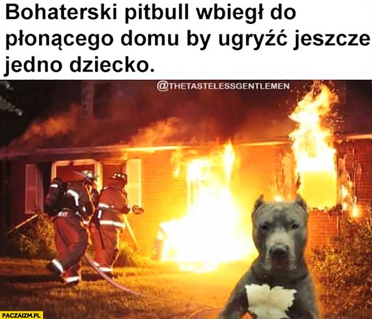 Bohaterski Pitbull wbiegł do płonącego budynku ugryźć jeszcze jedno dziecko