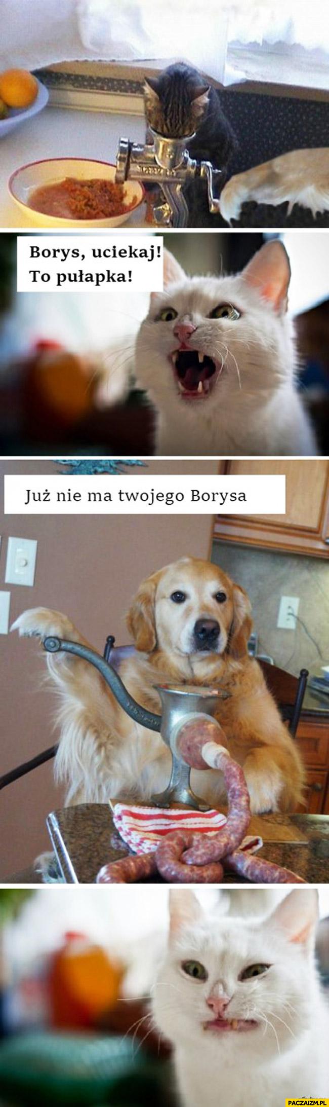 Borys uciekaj to pułapka już nie ma twojego Borysa kot pies