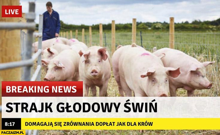 Breaking news strajk głodowy świń domagają się zrównania dopłat jak dla krów