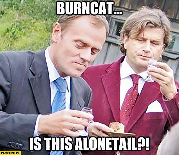 Burncat is this alonetail Palikot czy to samogon? Angielski z Tuskiem
