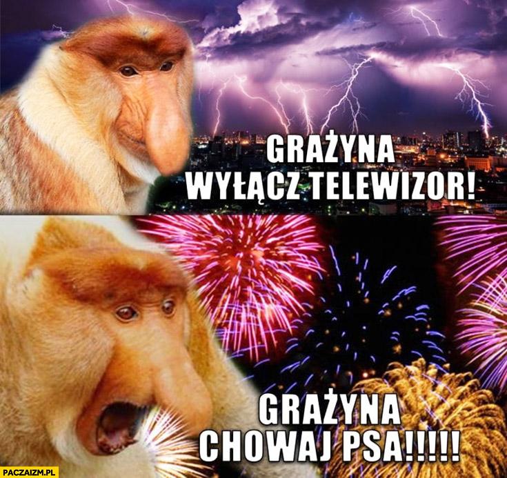 Burza Grażyna wyłącz telewizor, fajerwerki petardy Grażyna chowaj psa typowy Polak nosacz małpa