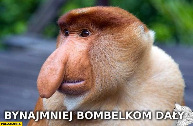 Bynajmniej bombelkom dały małpa nosacz