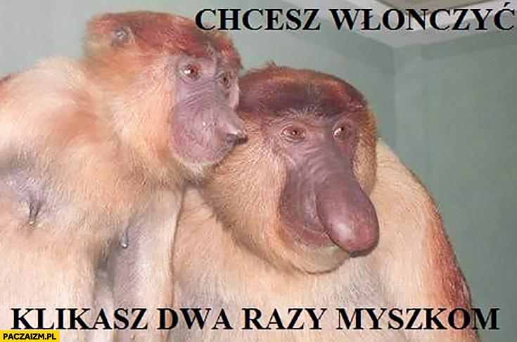 Chcesz włączyć klikasz dwa razy myszką typowy Polak nosacz małpa