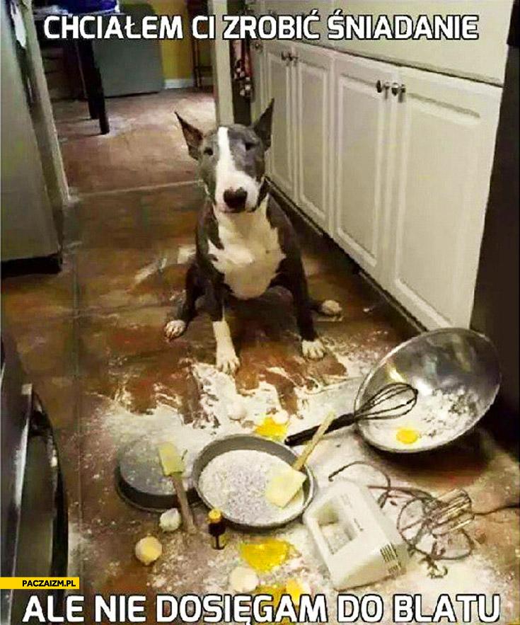 Chciałem Ci zrobić śniadanie ale nie dosięgam do blatu pies