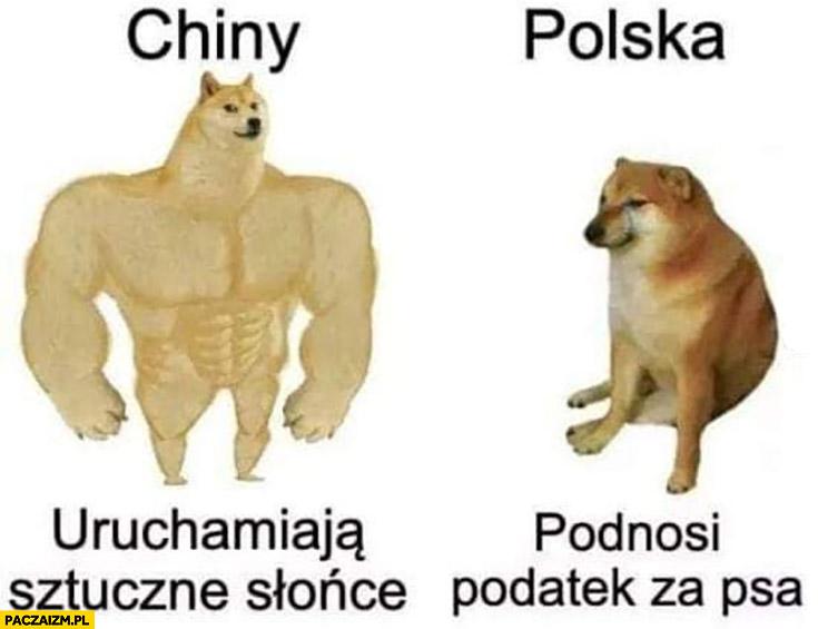 Chiny uruchamiają sztuczne słonce, Polska podnosi podatek za psa pieseł doge