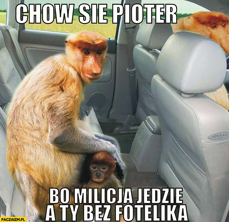 Chowaj się Pioter bo milicja jedzie a Ty bez fotelika policja typowy Polak nosacz małpa