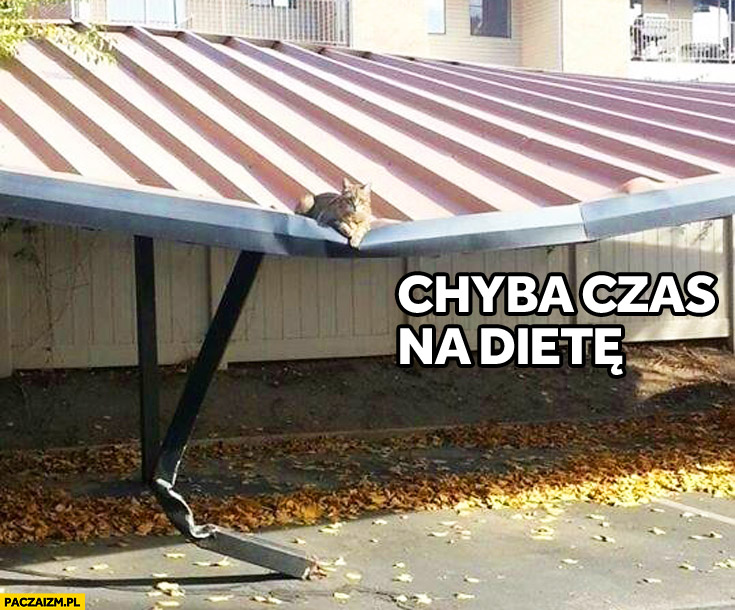 Chyba czas na dietę. Dach zarwał się pod ciężarem kota