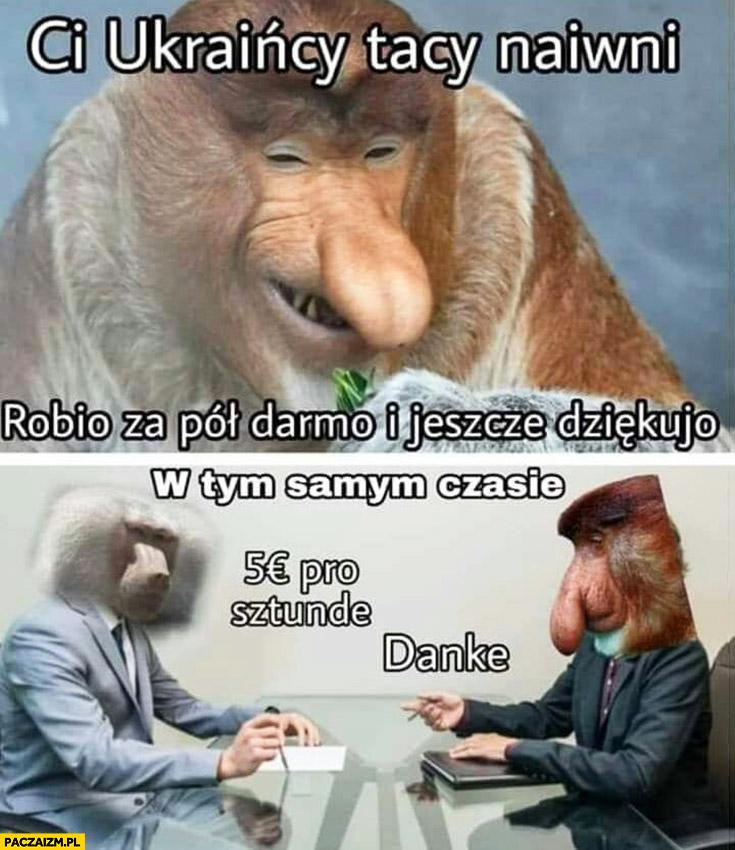 Ci Ukraińcy naiwni robią za pół darmo i jeszcze dziękują małpa Niemiec 5 euro za godzinę dzięki typowy Polak nosacz małpa