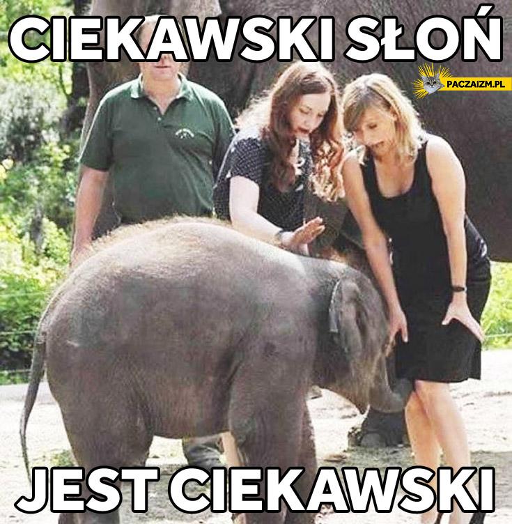 Ciekawski słoń jest ciekawski