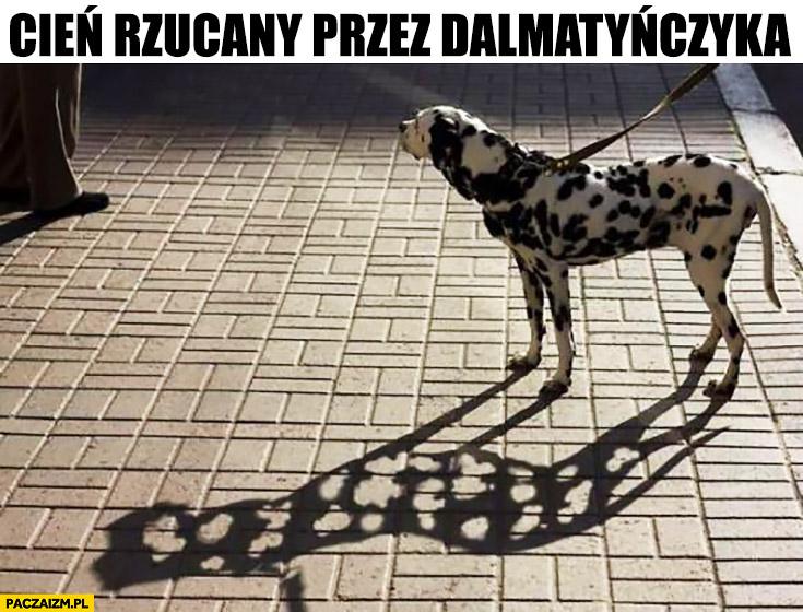 Cień rzucany przez dalmatyńczyka dziurawy