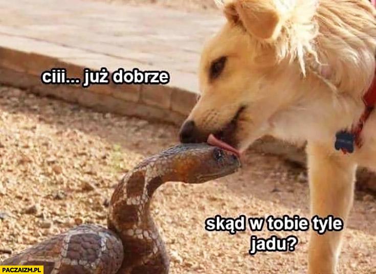https://paczaizm.pl/content/wp-content/uploads/cii-juz-dobrze-skad-w-tobie-tyle-jadu-pies-lize-weza.jpg