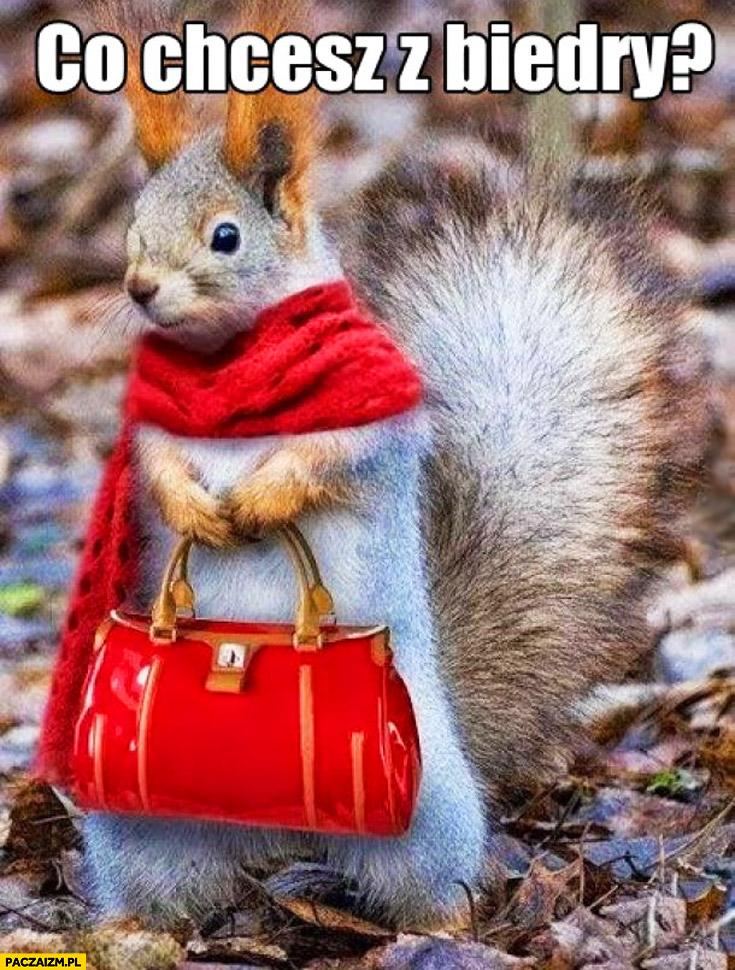 Co chcesz z Biedry wiewiórka