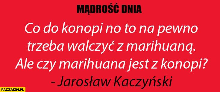 Co do konopi to na pewno trzeba walczyć z marihuana, ale czy marihuana jest z konopi? Kaczyński