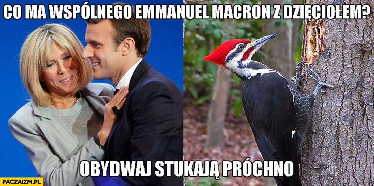 Co ma wspólnego Emmanuel Macron z dzięciołem? Obydwaj stukają próchno