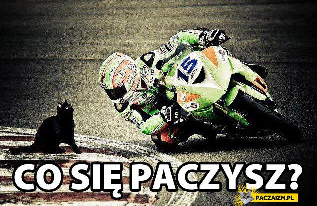 Co się paczysz? Kot motocyklista patrzą na siebie